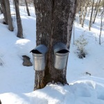 Maple Syrup and How We Make It