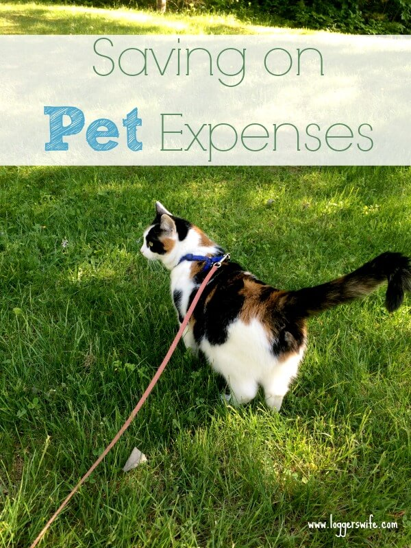Pets can be such an important part of the family, but they can be expensive. Check out my tips for saving money on pet expenses.